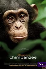 Фильм Шимпанзе (2012)